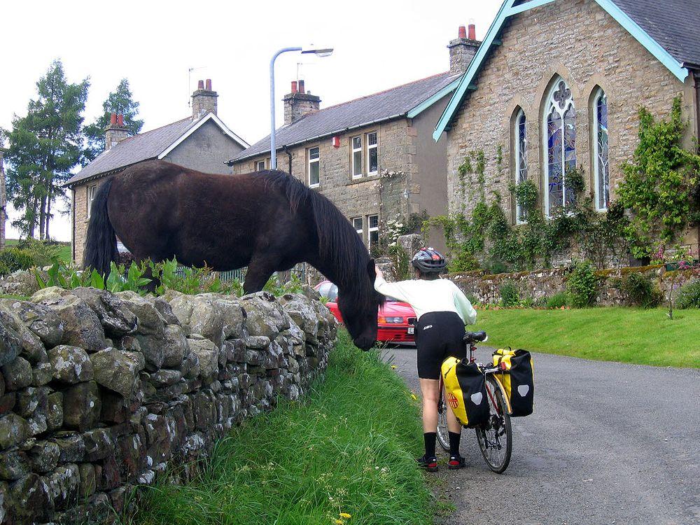 Sju tips för dig som möter hästar i trafiken